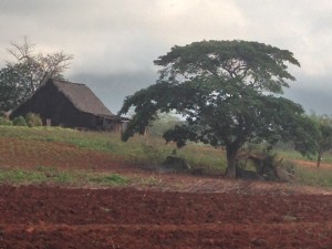 Tobacco Field and Drying Hut - Vinales